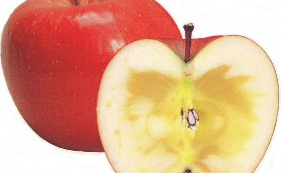 リンゴでマーク