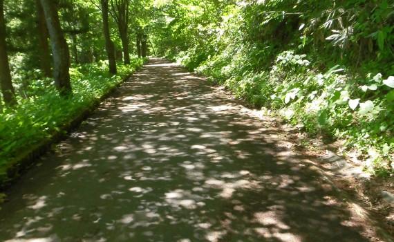 木漏れ日遊歩道CIMG0770